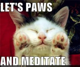 funny-pictures-lets-paws-and-meditate